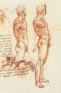 Anatomy_of_a_Male_Nude