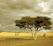 Morocco_Triebert_tree_750x477_feature