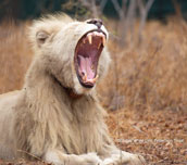 One United Roar for Nature