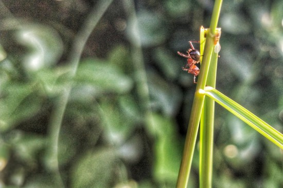 Macro photographing ants. One of the most community driven species in the world. Something that Auroville stands for